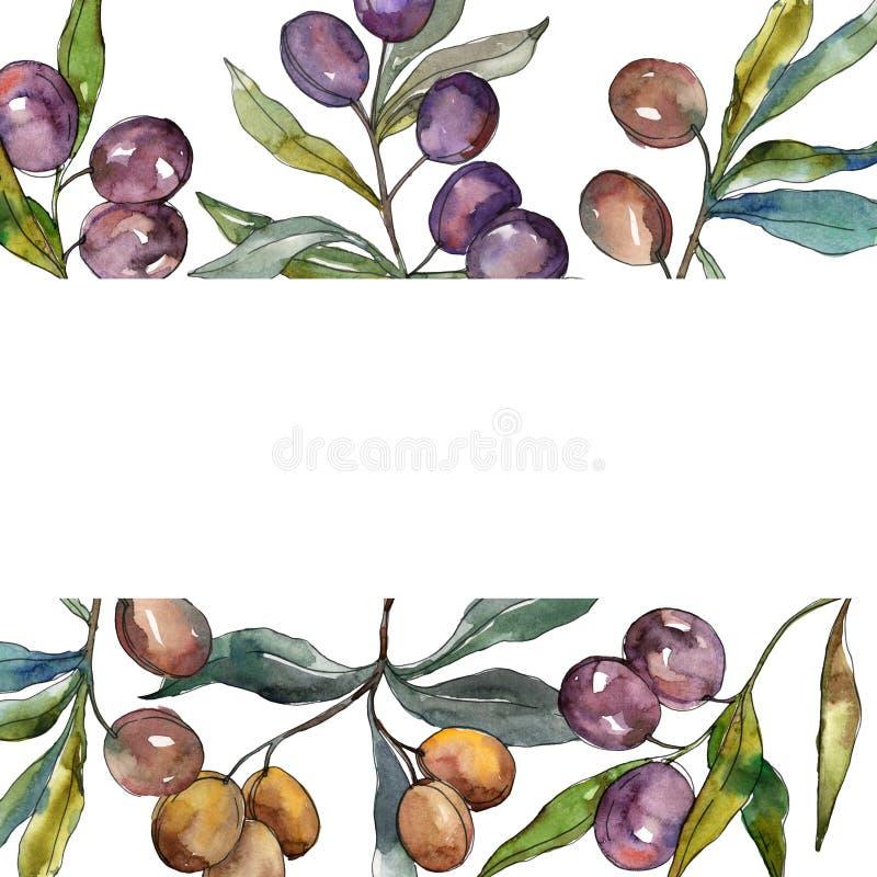 Ramo di ulivo con frutta nera e verde Insieme dell'illustrazione del fondo dell'acquerello Quadrato dell'ornamento del confine de illustrazione vettoriale