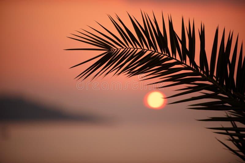 Ramo di una palma con il sole che mette sopra l'orizzonte di mare fotografia stock libera da diritti