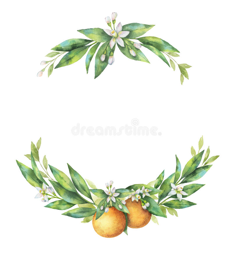 Ramo disegnato a mano dell'arancia della frutta della corona dell'acquerello illustrazione di stock