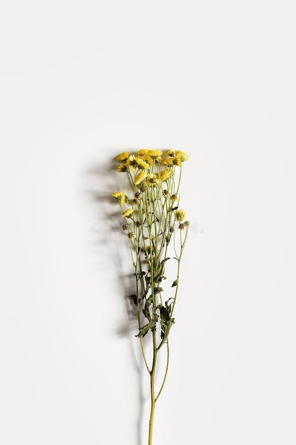 Ramo do crisântemo com as flores amarelas pequenas em um fundo branco imagem de stock royalty free
