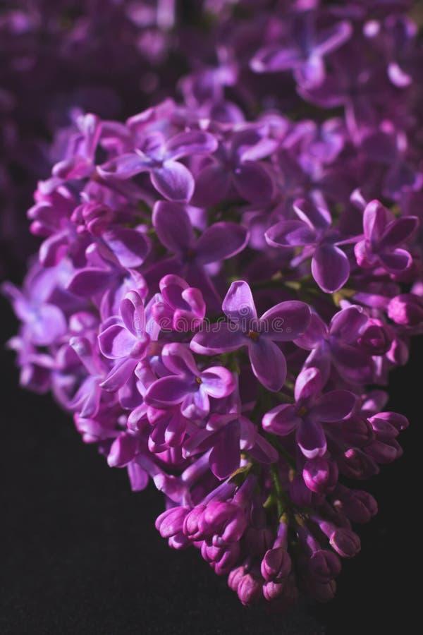 Ramo do lilás no fundo escuro com processamento artístico imagem de stock royalty free