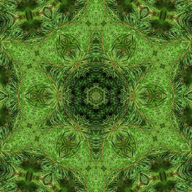 Ramo do pinho macio verde imagens de stock