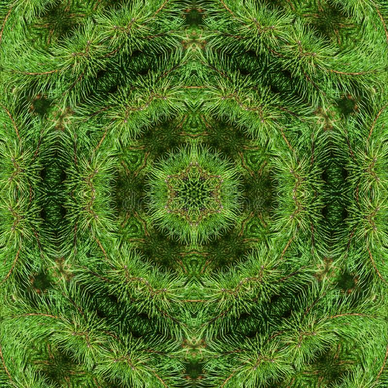 Ramo do pinho macio verde imagem de stock