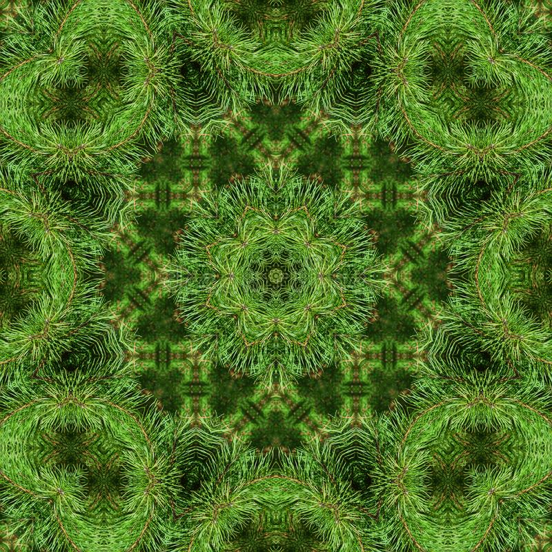 Ramo do pinho macio verde foto de stock royalty free