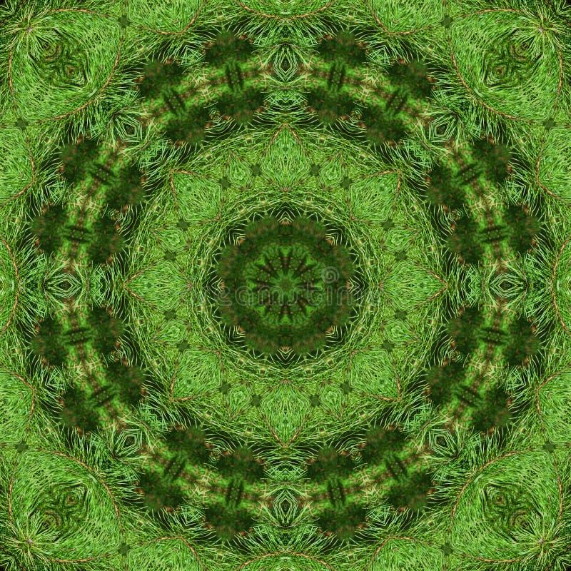 Ramo do pinho macio verde imagem de stock royalty free