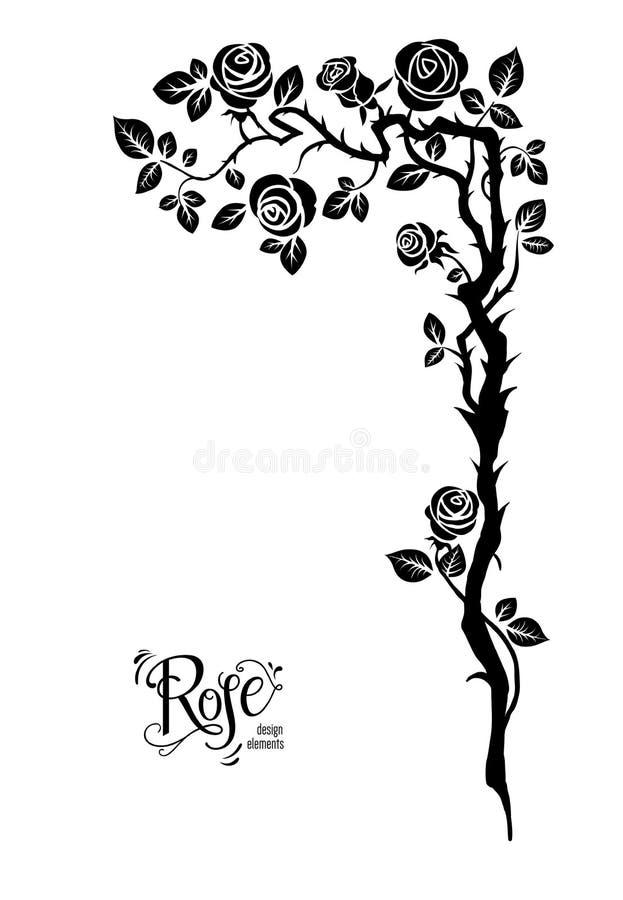Ramo do preto de Rosa ilustração stock