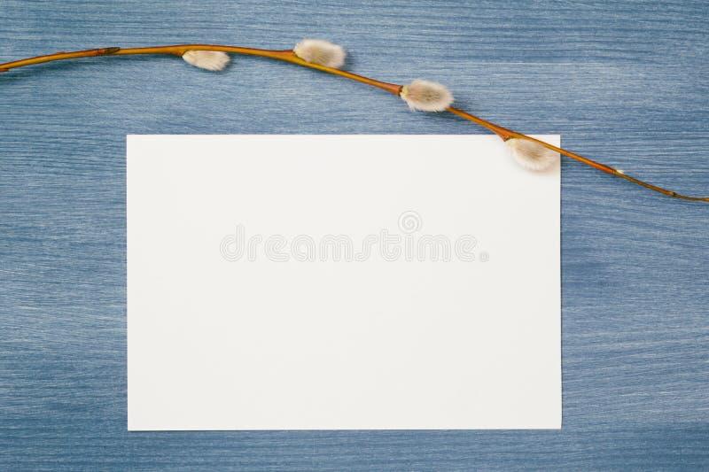 Ramo do salgueiro no cartão de papel fotografia de stock royalty free