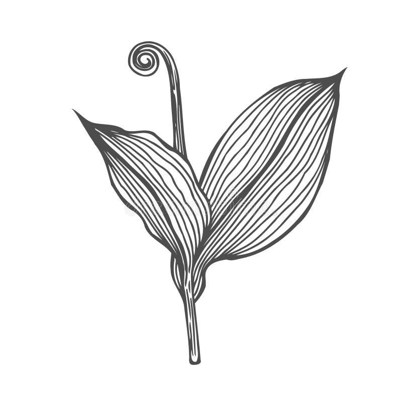Ramo do vidoeiro e ramo do larício ilustração do vetor