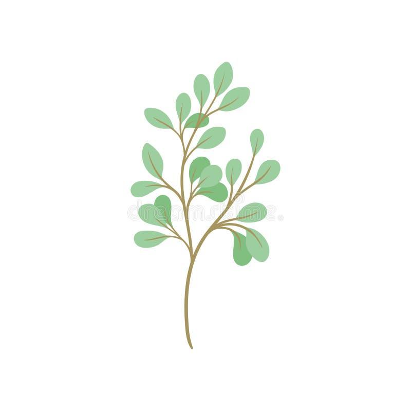 Ramo dos desenhos animados com folha verde no fundo branco ilustração stock