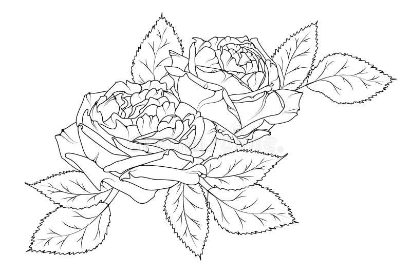 Ramo exhausto de la mano hermosa que sorprende de peonías Estilo blanco negro del tatuaje del bosquejo del esquema Flores y hojas stock de ilustración