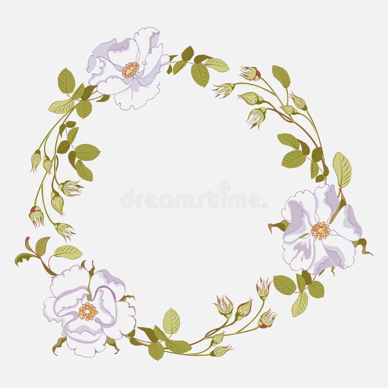Ramo floral da rosa selvagem branca bonita com os quadris cor-de-rosa no fundo branco, close-up ilustração stock