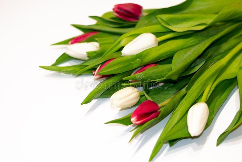 Ramo fresco hermoso de flores del tulipán aisladas en el fondo blanco con el espacio de la copia imagenes de archivo