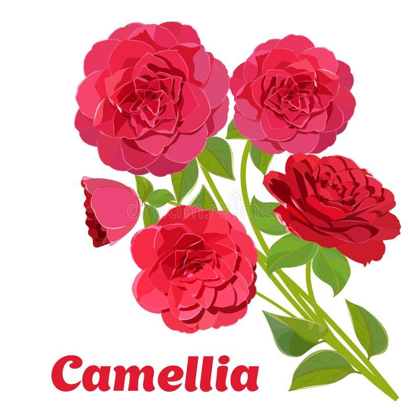 Ramo hermoso brillante de camelias rojas aisladas en el fondo blanco ilustración del vector
