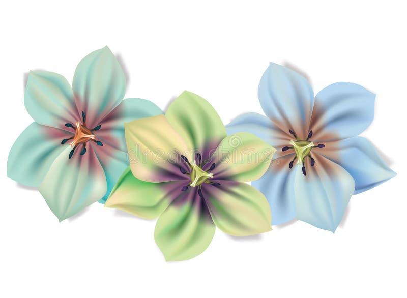 Ramo hermoso de flores Flores del verano del vector aisladas en el fondo blanco Flor para el diseño floral Lirios adentro libre illustration