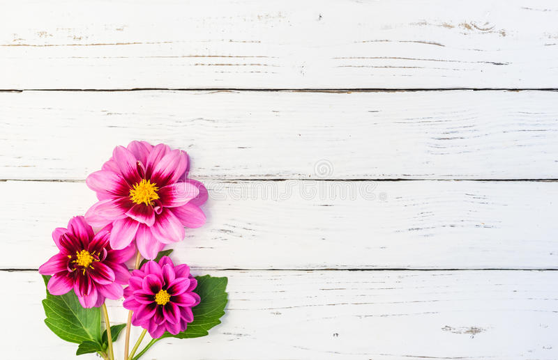 Ramo hermoso de flores rosadas de la dalia imágenes de archivo libres de regalías