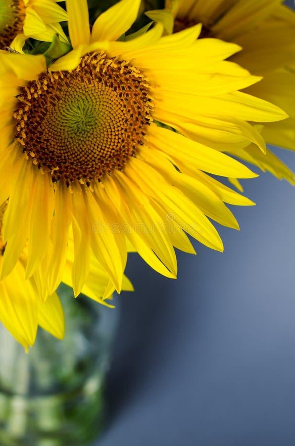 Ramo hermoso de girasoles amarillos brillantes contra fondo gris fotos de archivo libres de regalías