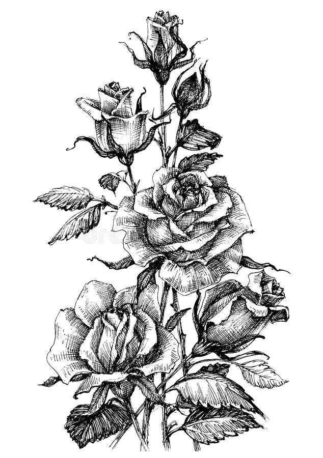 Ramo hermoso de las rosas stock de ilustración