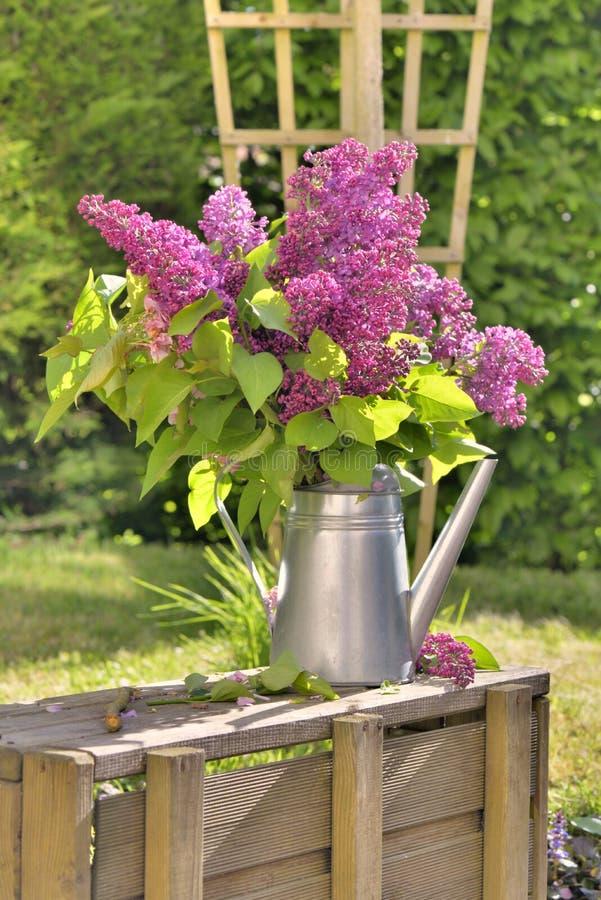Ramo hermoso de lila rosada en jardín fotos de archivo