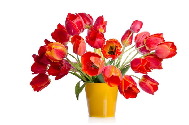 Ramo hermoso de tulipanes coloridos en pote amarillo foto de archivo libre de regalías