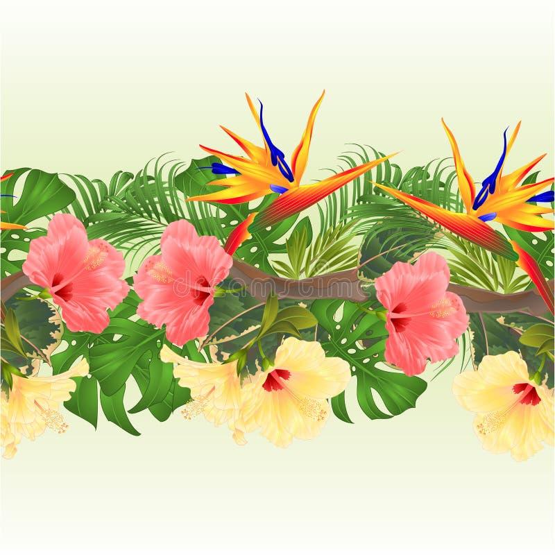 Ramo inconsútil del fondo de la frontera tropical con las flores tropicales rosa e hibisco y palma amarilla del Strelitzia, philo ilustración del vector