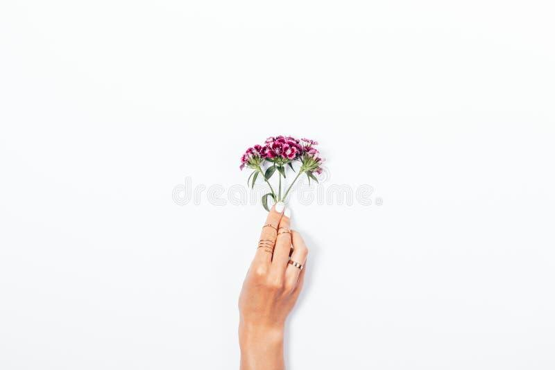 Ramo minúsculo da flor na mão da fêmea com tratamento de mãos branco fotos de stock royalty free