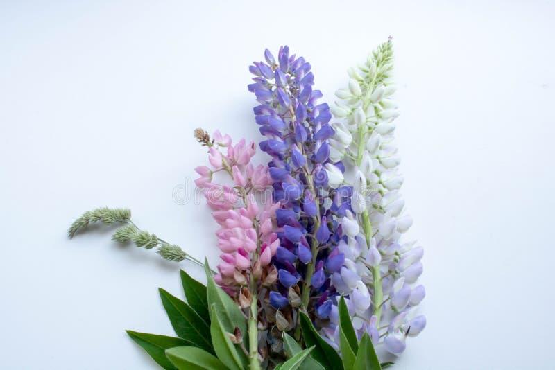 Ramo multicolor de altramuces en un postcsrd blanco del fondo foto de archivo libre de regalías