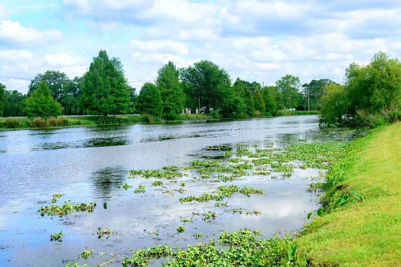 Ramo paludoso di fiume Lafourche, Luisiana fotografia stock