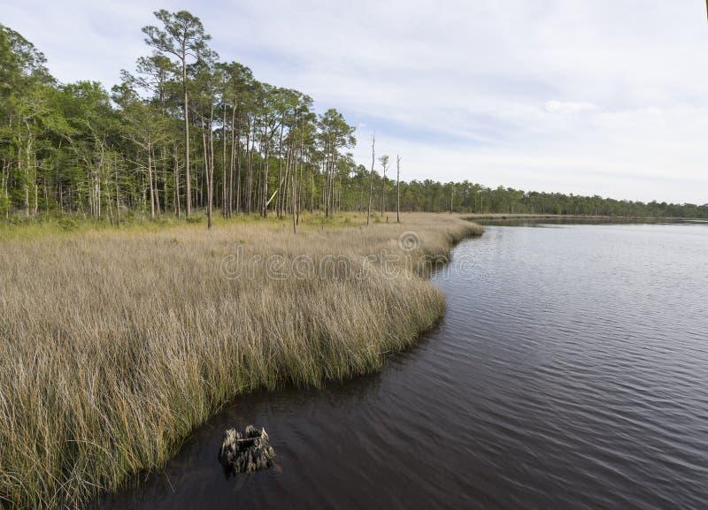 Ramo paludoso di fiume di Tarkiln alla baia di Perdido in Florida fotografia stock libera da diritti