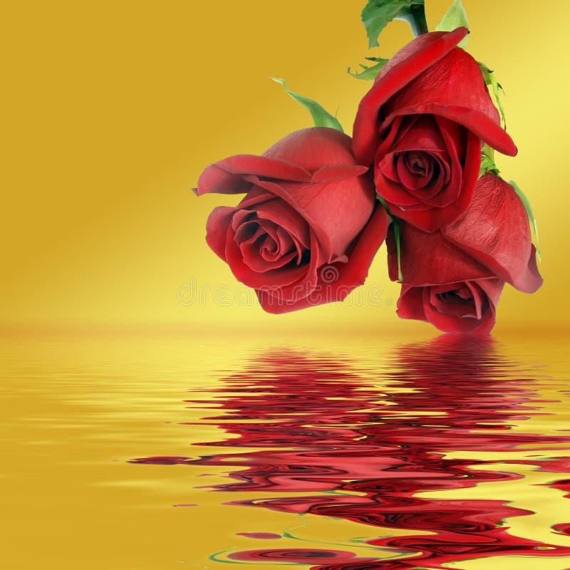 Ramo a partir de tres rosas rojas fotografía de archivo