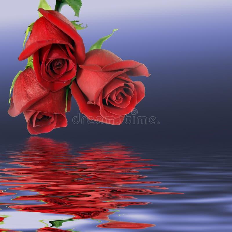 Ramo a partir de tres rosas rojas foto de archivo