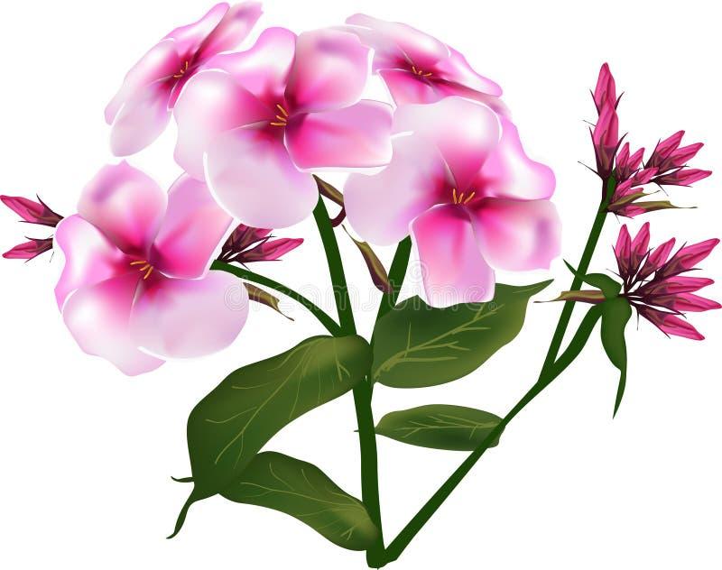 Ramo pequeno cor-de-rosa da flor isolado no branco ilustração do vetor