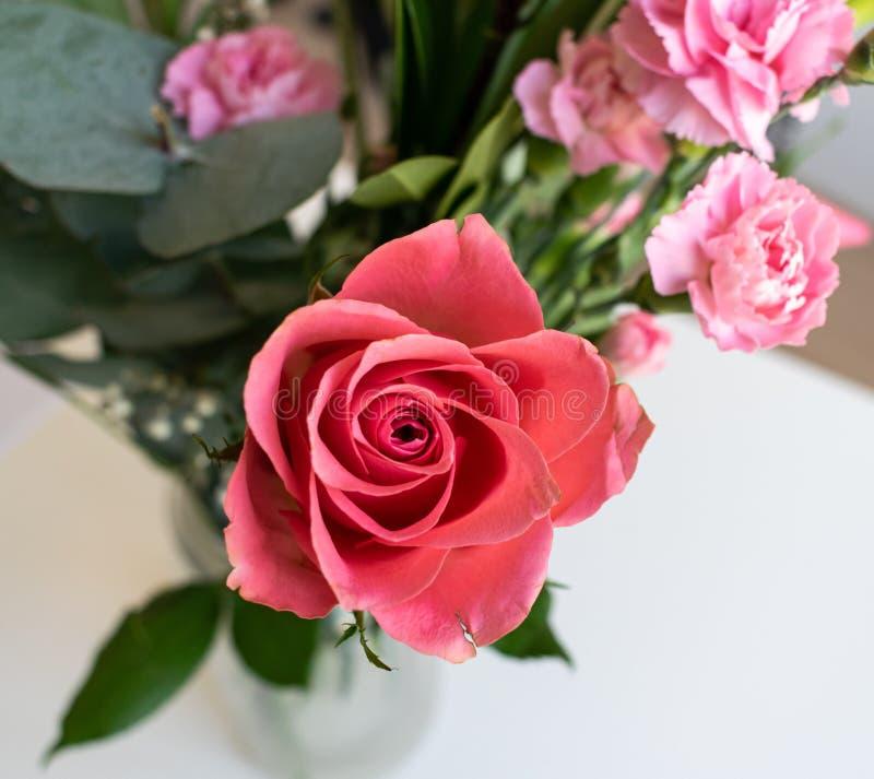 Ramo rojo rosa claro de las flores Dentro con el fondo blanco fotos de archivo