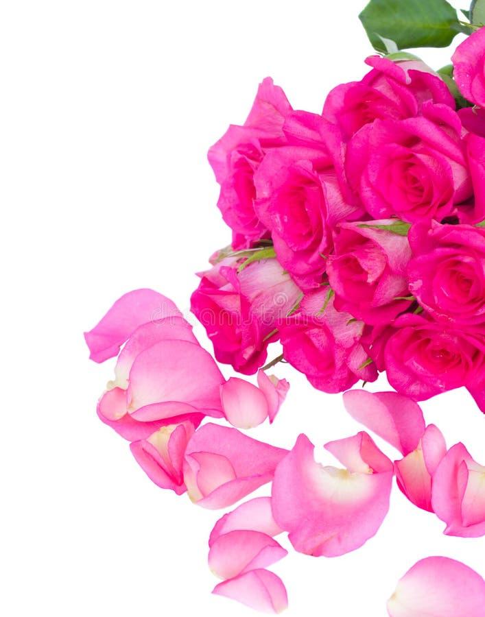 Ramo rosado fresco de las rosas con los pétalos foto de archivo libre de regalías