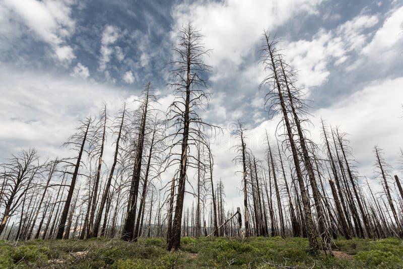 Ramo secco, paesaggio dell'ambiente di ecologia immagini stock libere da diritti