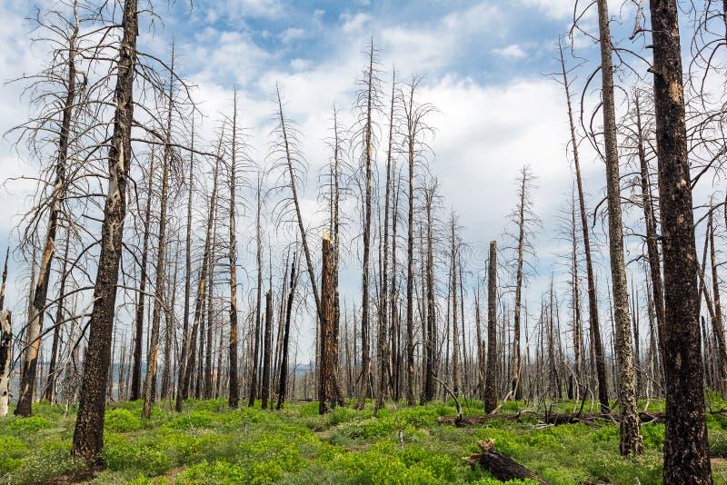 Ramo secco, paesaggio dell'ambiente di ecologia immagine stock