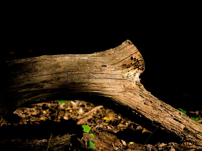 Ramo seco da árvore em um fundo escuro imagem de stock royalty free