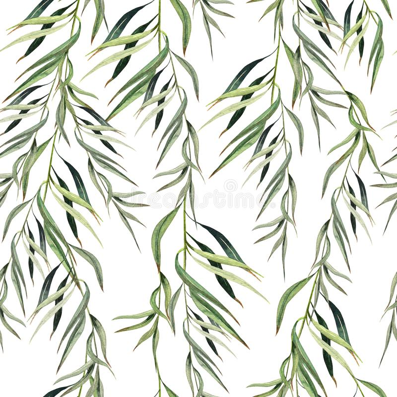Ramo sem emenda do eucalipto do witn do teste padrão da aquarela Ilustração desenhada mão ilustração royalty free