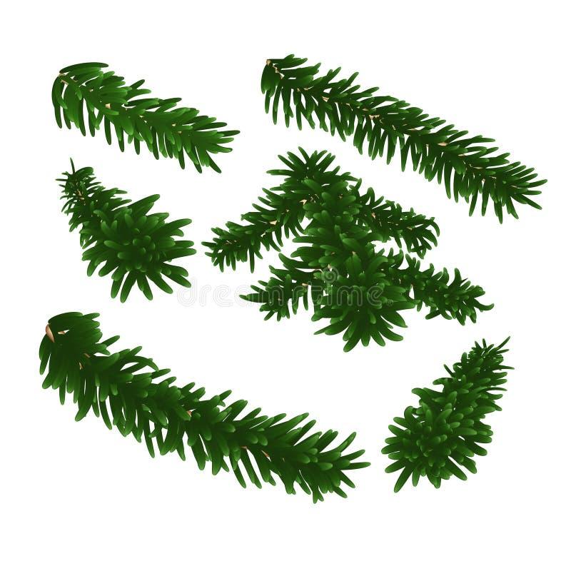 Ramo spruce luxúria verde Jogo de filiais do abeto Isolado no fundo branco ilustração do vetor