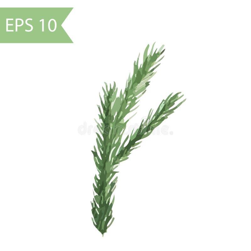 Ramo spruce verde pintado na aquarela imagem isolada vetor ilustração stock