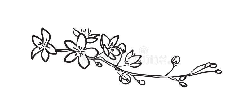 Ramo tirado de sakura da pintura da escova da mão preta O vetor estilizou a silhueta decorativa das flores da cereja pintadas pel ilustração royalty free