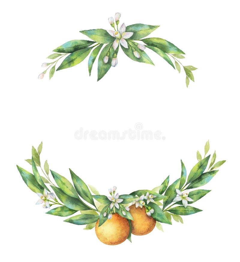 Ramo tirado mão da laranja do fruto da grinalda da aquarela ilustração stock