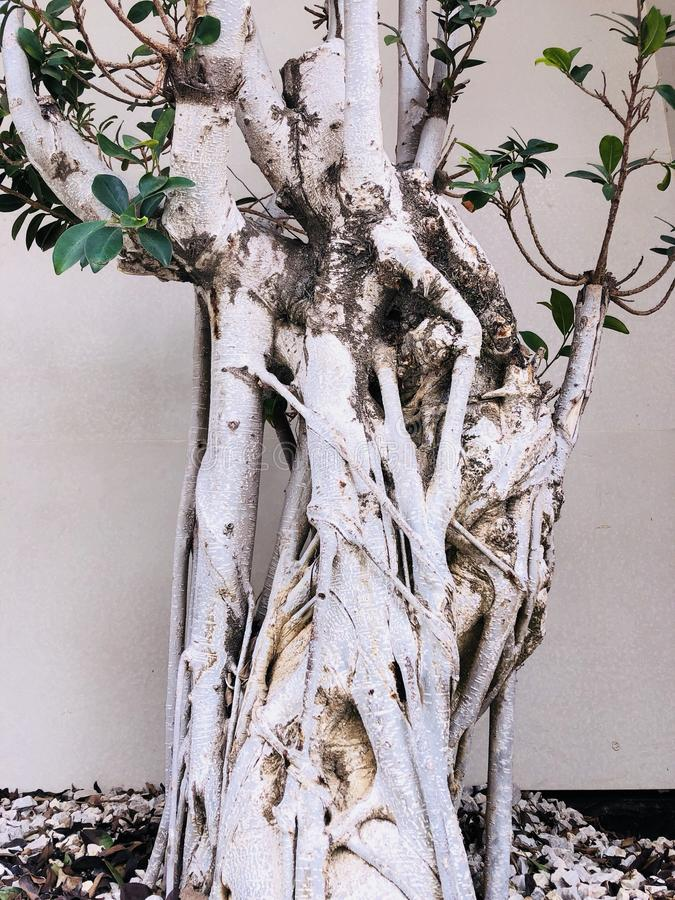 Ramo torto insolito del tronco di albero immagini stock