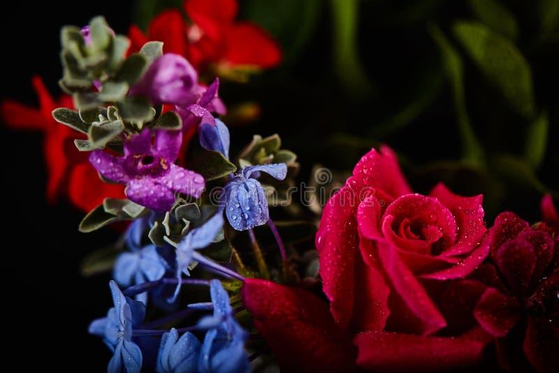 Ramo - variedad de flores, estudio tirado con el contexto negro fotos de archivo
