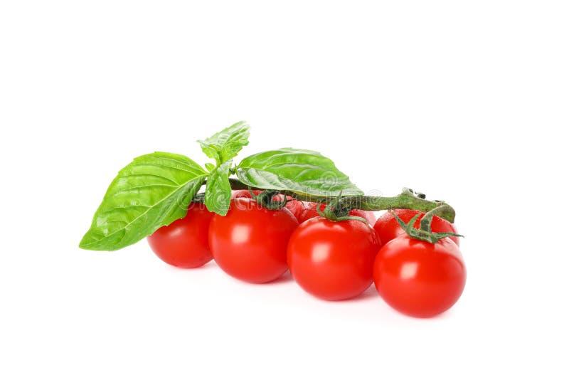 Ramo verde con i pomodori ciliegia freschi e basilico isolato su fondo bianco immagini stock libere da diritti