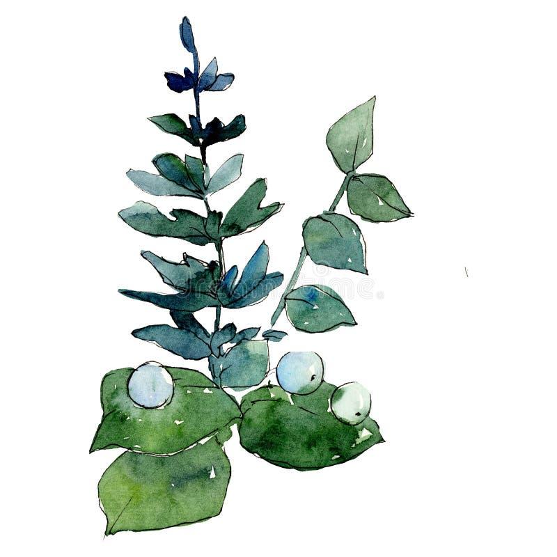 Ramo verde de las hojas Wildflower salvaje de la hoja de la primavera aislado Sistema del ejemplo del fondo de la acuarela stock de ilustración