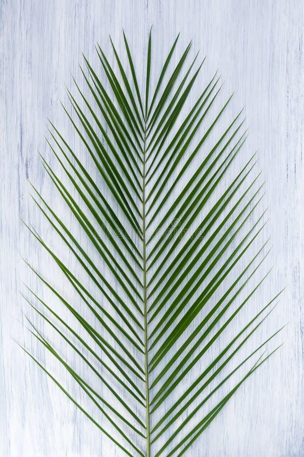 Ramo verde em um fundo cinzento, close-up da palma imagens de stock royalty free