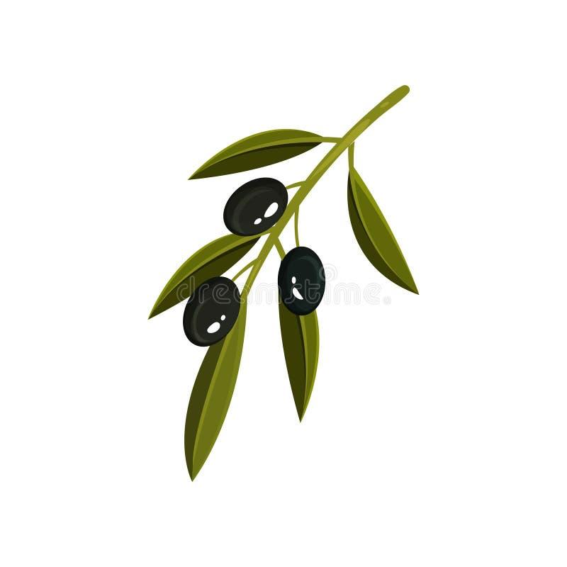 Ramo verde pequeno com as três azeitonas pretas e folhas Alimento biológico Produto saudável e saboroso Ícone liso do vetor ilustração do vetor