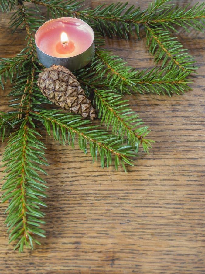 Ramo vertical do abeto da árvore do abeto vermelho do quadro da decoração do Natal com imagens de stock royalty free