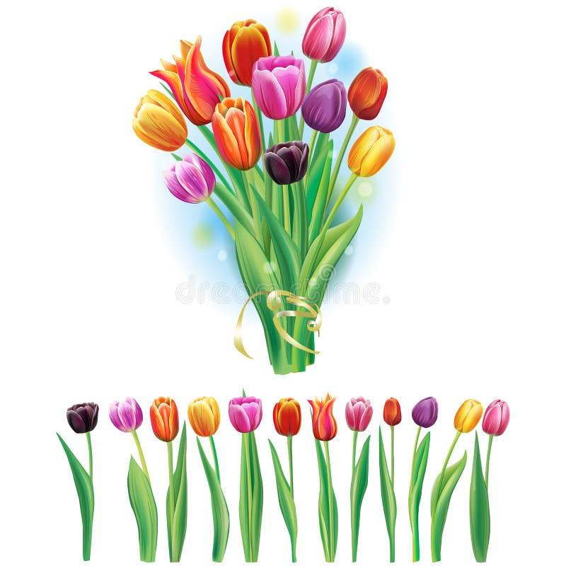 Ramo y frontera con los tulipanes multicolores stock de ilustración