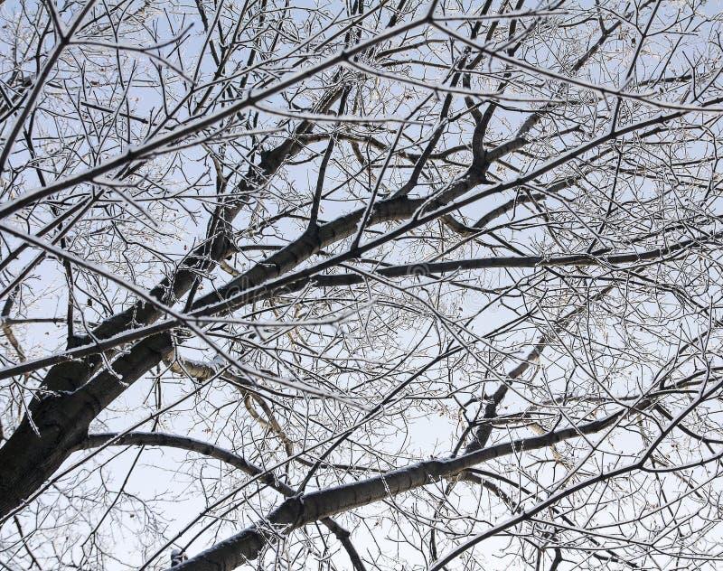 Ramos cobertos de neve de uma árvore sem folhas em um fundo do céu fotografia de stock royalty free